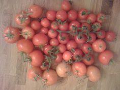 Tomatoes Grown 2011