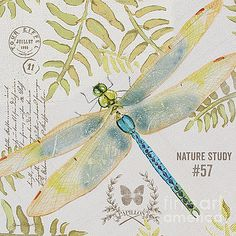 Botanical Dragonfly-JP3418 by Jean Plout