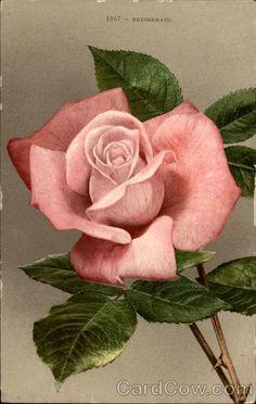 1967 - Bridesmaid (Pink Rose) Flowers