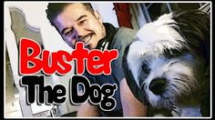 Buster the dog  - Tressmania is dog sitter again...:-) Funny Dog..:-D