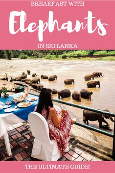 THE ULTIMATE GUIDE OF HOW TO HAVE BREAKFAST WITH ELEPHANTS IN SRI LANKA - THIRD EYE TRAVELLER