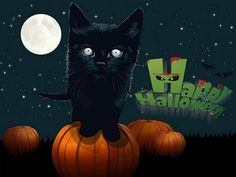 Animated Black Cat Halloween Pictures, Images, Photos, Greetings Halloween Quotes, Halloween 2014, Halloween Pictures, Happy Halloween, Day Wishes, Pictures Images, Hd Wallpaper, Clip Art, Animation