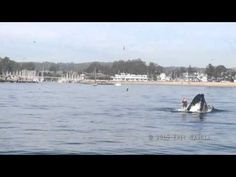 Hump Back Whale Encounter | Paddle Boarder