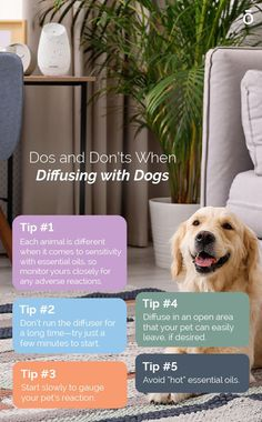 Here's our cheat sheet for diffusing essential oils around your dog! Make sure your furry friend is always comfortable and safe when diffusing.