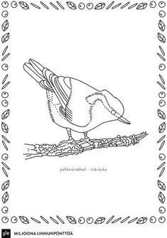 Pähkinänakkeli Colouring Pages, Printable Coloring Pages, Coloring Pages For Kids, Sketch Painting, Types Of Art, Geography, Birds, Draw, Teaching
