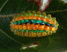 Découvrez le joyau de la nature, une chenille semblable à un bijou qui peuple la mangrove mexicaine | Daily Geek Show