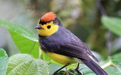 animal-wallpapers-nice-bird-pictures-wallpaper-33878.jpg (1280×800)