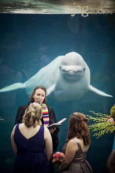 #Mystic Aquarium Wedding in Mystic, Connecticut #beluga