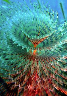 Fractal espiral simetrica na parte inferior da foto oceano por Adnan Dmda (tomadas na ilha de Mljet, Croácia)