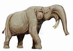 Resultado de imagen para elefante desde abajo
