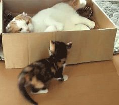 Crazy cat girl online hookup video i love