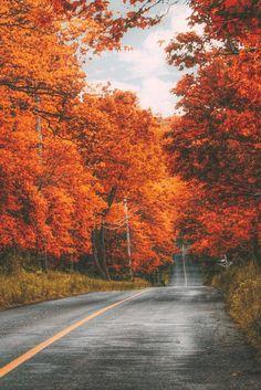 Fall in Hunterdon County, New Jersey Autumn Day, Hello Autumn, Autumn Leaves, Fall Trees, Autumn Nature, Autumn Forest, Autumn Scenery, Autumn Aesthetic, Fall Wallpaper