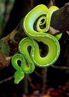 green python: nature can be neon