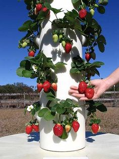 Diy hydroponic gardens for your small house 3170 Brilliant Ideas to Make Vertical Garden with PipesEasily grow up to 20 vegetables, herbs, fruits and flowers in less than 3 sq.—indoors or out—with Tower Garden: a vertical, aeroponic growing syste Vertical Vegetable Gardens, Vertical Garden Diy, Veg Garden, Fruit Garden, Vegetable Gardening, Garden Tomatoes, Garden Paving, Garden Soil, Hydroponic Gardening