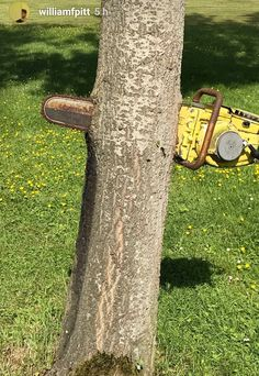 This old rusty chainsaw that's been pushed through a growing tree