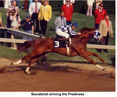 Secretariat's length of stride was quite impressive.  www.thewarmbloodhorse.com