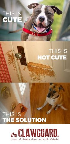 Diy tip of the day protecting doors from dog scratches protect need to protect your door from your dogs scratching clawguard is the answer eventshaper