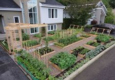 "Productive Frontyard Vegetable Garden! Remove the grass from your front yard and start a revolution! The food tastes great too""!"