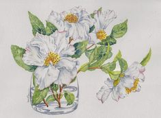 Sasanqua camellia. An attempt at painting white flowers. Original watercolour.