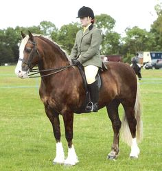 Profile - Ystrad Dewi Gladiator : Rainhill Welsh Cobs