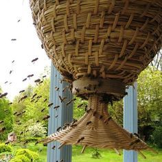 The Sun Hive: Experimental Natural Beekeeping Sun Hives are a hive design coming out of Germany and now gathering interest in Britain. They're part of the world-wide movement towards 'apicentric' beekeeping – beekeeping that prioritizes honeybees firstly as pollinators, with honey production being a secondary goal. http://milkwood.net/2013/03/05/the-sun-hive-experiments-in-natural-beekeeping