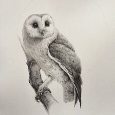 Image result for how to draw a realistic barn owl