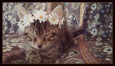 kitten, cat, crown, headband, pet, costume, tiara, wreath, show, photo, prop, puppy, dog, animal, daisy, flower, hippie, boho, accessories by dieselboutique on Etsy https://www.etsy.com/listing/197010850/kitten-cat-crown-headband-pet-costume