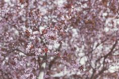 Check out Spring begins by Seronda Estudio on Creative Market