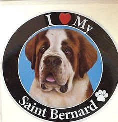 SAINT BERNARD DOG BREED  MAGNET ~  NEW