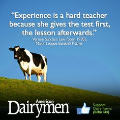 """""""Experience is a hard teacher  because she gives the test first,  the lesson afterwards."""" Vernon Sanders Law (born 1930); Major League Baseball Pitcher. www.facebook.com/americandairymen Agriculture Quotes, Farming Quotes, Farming Life, Show Cattle, Country Quotes, Don't Like Me, Ffa, Girls World, Sign Quotes"""