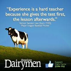 Experience is a hard teacher