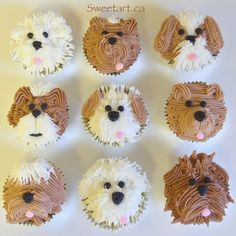 Planning a kids' birthday party or a baby shower? Here are some cute cupcakes that will be a hit. From barnyard animals to jungle themes to cat and puppy cupcakes, there are a ton of choices to have fun with! Puppy Cupcakes, Puppy Cake, Animal Cupcakes, Puppy Birthday Parties, Dog Birthday, Puppy Party, Puppy Birthday Cakes, Kids Butterfly Cake, Gateau Iga
