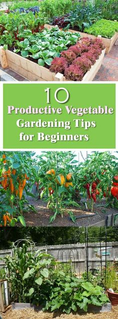 Growing your own vegetable is a healthy idea and if you're new to this, take a look at some of the most practical vegetable gardening tips!