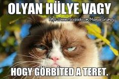 Grumpy Cat, real name Tardar Sauce, is a female cat and Internet celebrity known for her grumpy facial expression. Grumpy Cat Quotes, Grumpy Cat Humor, Cat Memes, Funny Memes, Grumpy Kitty, Kitty Cats, Jokes, Funny Qoutes, I Love Cats