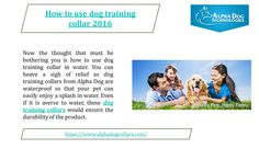 Dog Shock Collar, Positive Dog Training, Alpha Dog, Best Dog Training, Training Collar, Best Dogs, Your Pet, Collars, Freedom