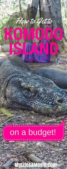 How to Get to Komodo Island, one of the New 7 Wonders of Nature, on a budget! - http://MyLifesAMovie.com