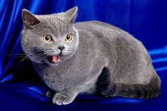 Kotka do kocura czy kocur do kotki?