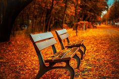 Shop our best value Park Bench Frames on AliExpress. Check out more Park Bench Frames items in Furniture, Home & Garden! And don't miss out on limited deals on Park Bench Frames! Palette Design, Photo Café, Luz Solar, Fall Background, Background Images, Free High Resolution Photos, Photo Images, Kunst Poster, Autumn Park