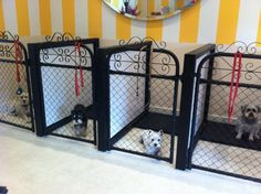 Very cute kennel area. Not completely practical but totally adorable. Pet Shop, Dog Grooming Shop, Dog Grooming Salons, Dog Grooming Business, Poodle Grooming, Dog Boarding Kennels, Dog Kennels, Cat Boarding, Pet Hotel