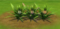 The Sims 4 Mody: Ananasy Aloha od MTS