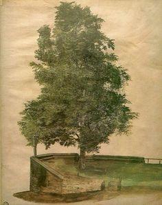 Linden Tree on a Bastion - Albrecht Dürer - circa 1489-1494. Colección privada. http://www.the-athenaeum.org/art/detail.php?ID=32817