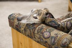 11 Best Dog Breeds for Introverts