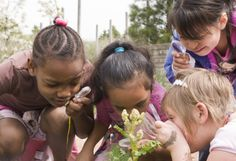 Girls gather in the vegetables at the Fruit & Vegetable garden on their field trip to Chicago Botanic Garden.