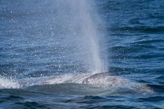 Whales Tail Charters | Whale Watching Tours | Depoe Bay | Oregon