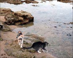colonia felina su pallosu - Szukaj w Google