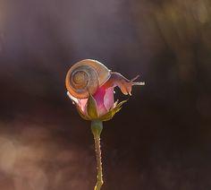 Snail by Paweł Pluciński