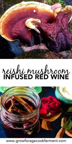 Make this reishi mushroom infused red wine for a delicious and relaxing drink! This cordial also contains rose hips and the adaptogen herb ashwagandha. This herbal wine is good for the immune system! #reishi #mushroom #infusion #wine #cordial #medicinal