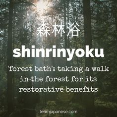 Shinrinyoko: the Japanese word for 'forest bath', aka taking a walk in the forest for its restorative benefits. For more beautiful and untranslatable Japanese words, visit teamjapanese.com
