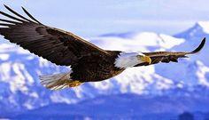 Image for Gambar Burung Elang 3D Wallpaper HD
