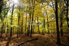 image of autumn trees. - Scenic image of autumn trees.